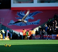 The Eagle på Selhurst Park - Crystal Palace - sawll4u - Flickr.com
