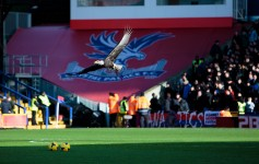 The Eagle på Selhurst Park - Crystal Palace - sawll4u - Flickr.com